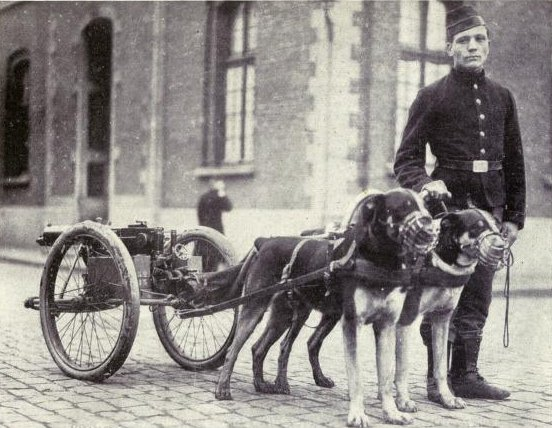 Image:Belgian dogs trained to draw quick-firing guns.JPG