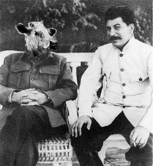 Tiedosto:Stalin-Cow.jpg