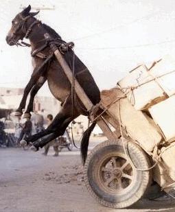 Resultado de imagem para carroça puxada por burro