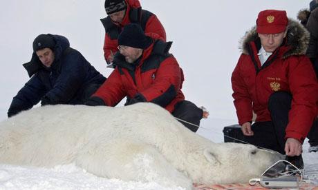 Putin polar bear.jpg