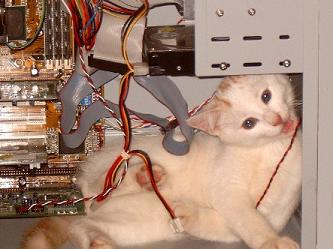 Arquivo:Funny Cat In Computer.jpg