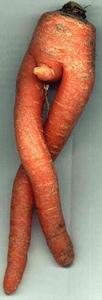 Rude_carrot.jpg
