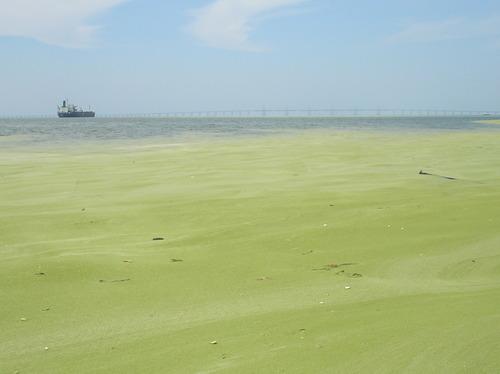 Image:Lago Maracaibo.jpg