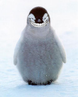 Evil Penguin Chick
