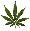 Leaf of Marijuana.jpg