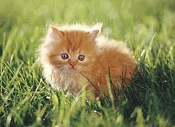 Orange Kitten.jpg