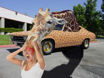 Driveby Giraffe