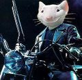 Stuart little su moto.jpg