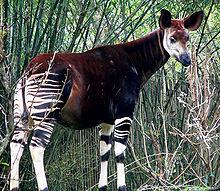 Seria uma zebra? Uma girafa? Um ET?