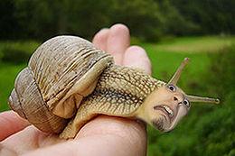 Hvordan sneglen føler seg når du tar den i hånden.