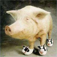 Porco Vacco.jpg