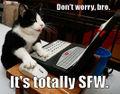 Trollcat.jpg