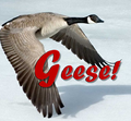 Geese!.png