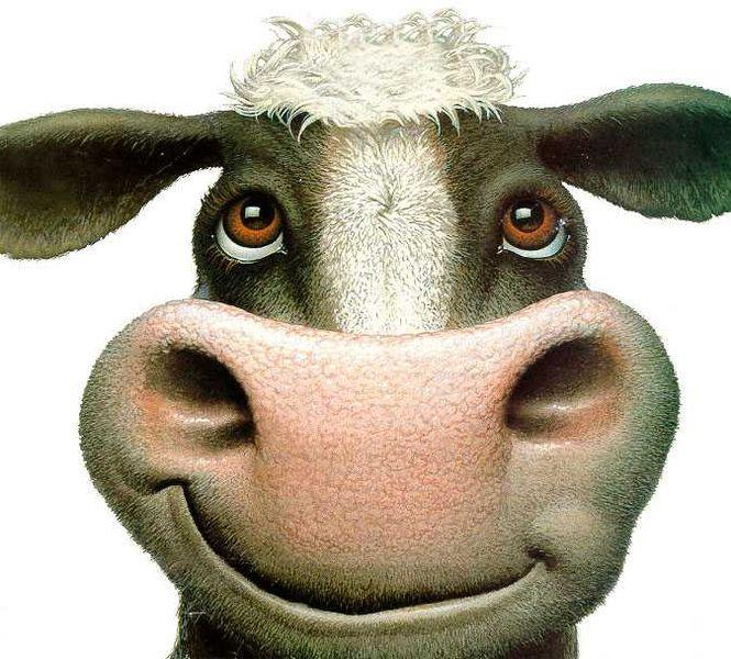 ファイル:Cow-look-up.jpg