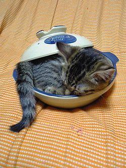 貓鍋.jpg