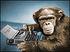 Typing monkey.jpg