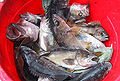 Fish in a bucket 5.jpg