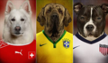 Doggies World Cup 2014.png