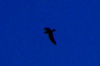 Seagull silhouette.jpg
