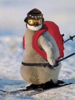 Ski animal.jpg