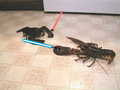 Lobster lightsaber combat.png
