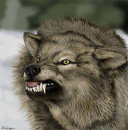 Ulven - like snill og koselig som alltid.