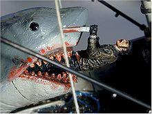Simpático tubarão!