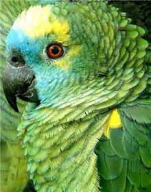 Repare que o papagaios são seres que estão sempre feliz e sorrindo. Que exemplo! Vamos imita-los