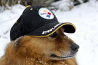 Steelerdog.png