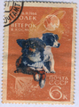 Dog stamp.png