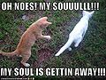 Funny-pictures-kitten-soul-escapes.jpg