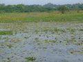 Sri Jayawardenapura Kotte.jpg