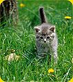 Cute-kitten-picture-in-the-grass.jpg