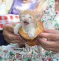 Halp-i-not-cheezburger.jpg