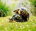 01-hepa-turtle-sex.jpg
