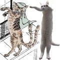 Longcat vs Nekomata.jpg