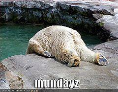 Monday-bear.jpg