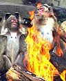Monkey-fire-big.jpg