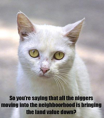 Racist cat.jpg
