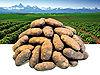PotatopeoplePortal.jpg