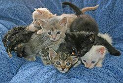 Kitten pile.jpg