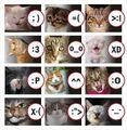 Gatos smiles.jpg