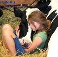 Vacas tolas-02.jpeg