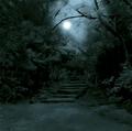 A Selva Negra.png