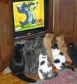Gatos asistindo a Tom e Jerry.jpg