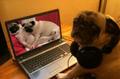 Pornografía canina.png