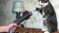 Aspirador de gato.jpg