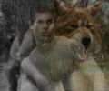 Jacob Black wolfform.jpg