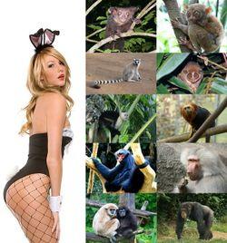 Fotos de especies dalgunhas familias de primates: Homo cuniculus, Daubentoniidae, Tarsiidae, Lemuridae, Lorisidae, Cebidae, Callitrichidae, Atelidae, Cercopithecidae, Hylobatidae e Hominidae.