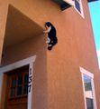 Gato pregado na casa.jpg